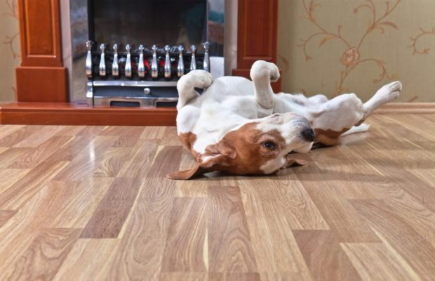 Best Flooring For Dogs That Urinate Frequently WallEbuilders - Best floor for dogs that pee